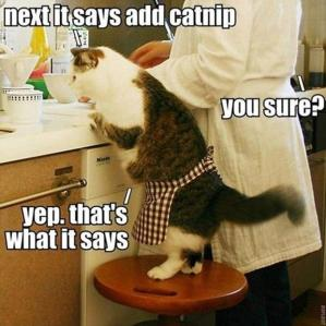 a-funny-pictures-cooking-with-your-cat