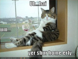 funny-pictures-cat-drinking-wine