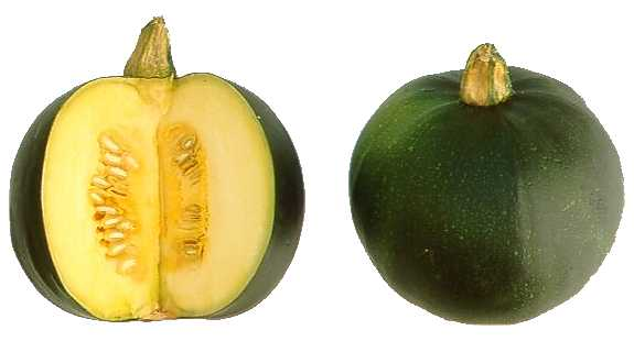 how to cook gem squash for babies