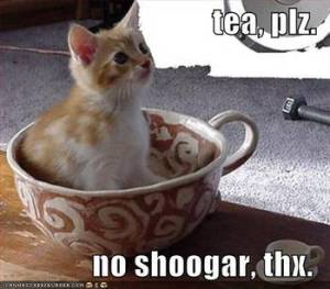 SCD kitty knows shoogar iz badz