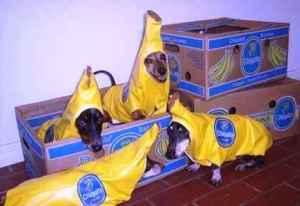 funny-banana-dogs