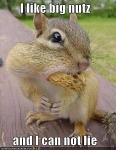 funny-pictures-squirrel-big-nuts