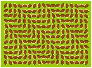 Illusion_Nuts